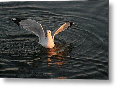 Seagulls At Sunset Metal Print by Valia Bradshaw