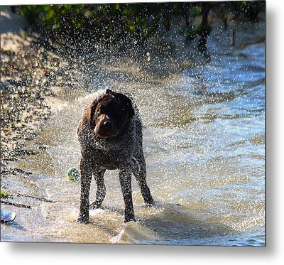 Metal Print featuring the photograph Shake Shake Shake by Jeanne Andrews