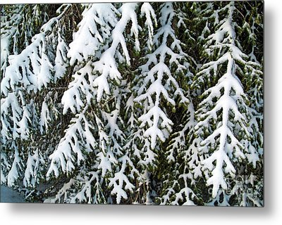 Snowy Fir Tree Metal Print by Sami Sarkis