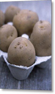 Solanum Tuberosum 'charlotte' Metal Print by Maxine Adcock