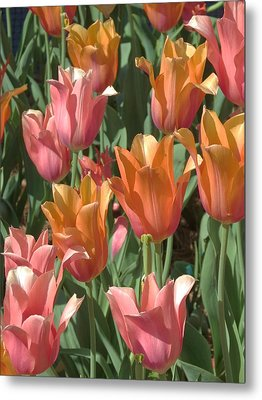 Metal Print featuring the photograph Spring Tulips  by Rebecca Overton