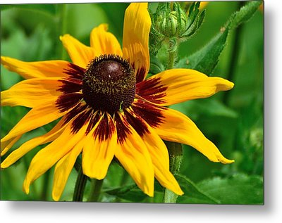 Metal Print featuring the photograph Sunflower by Kathy King