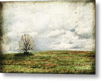 The Lone Tree Metal Print by Darren Fisher