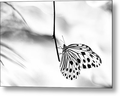 The Paper Kite Butterfly In Black And White Metal Print