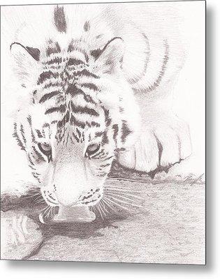 Tiger By A Creek Metal Print by Kaylee Axberg
