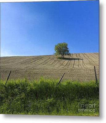 Tree  Metal Print by Bernard Jaubert