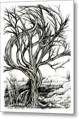 Twisted Tree Metal Print by Danielle Scott
