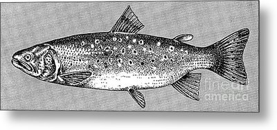 Trout Metal Print by Granger