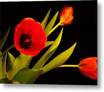 Metal Print featuring the photograph Tulip Arrangement 2 by Peter Mooyman