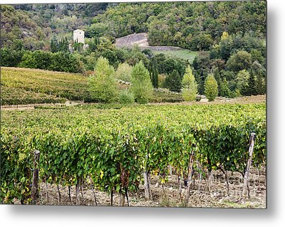 Vineyard Metal Print by Jeremy Woodhouse