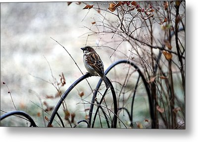 Metal Print featuring the photograph Watchful Eye by Elizabeth Winter