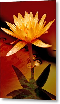 Water Lily 1 Metal Print by Julie Palencia