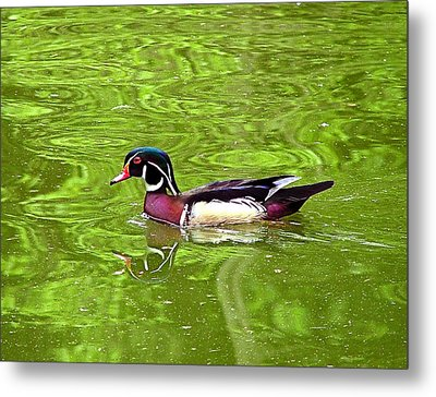 Metal Print featuring the photograph Water Wood Duck by Wendy McKennon