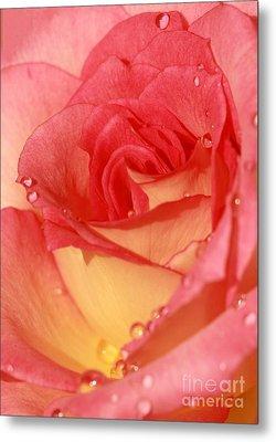 Wet Rose Metal Print by Sabrina L Ryan