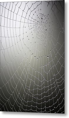 What A Tangled Web.... Metal Print