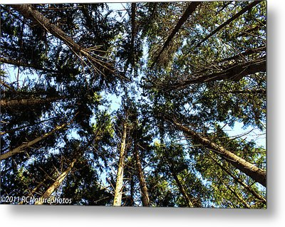 Metal Print featuring the photograph Whispering Pines by Rachel Cohen