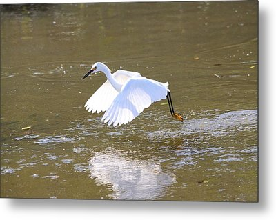 Metal Print featuring the photograph White Egret by Jeanne Andrews