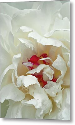 Metal Print featuring the photograph White Peony by Gordon Ripley