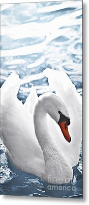 White Swan On Water Metal Print by Elena Elisseeva