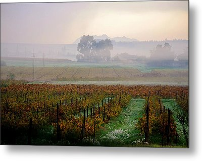Metal Print featuring the photograph Wine Field by Werner Lehmann