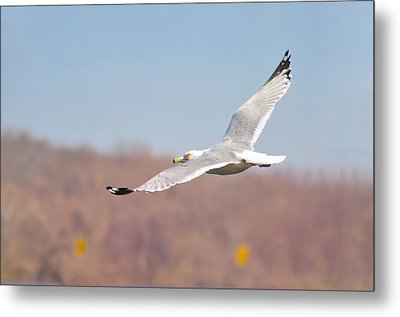 Wingspan Metal Print by Bill Cannon