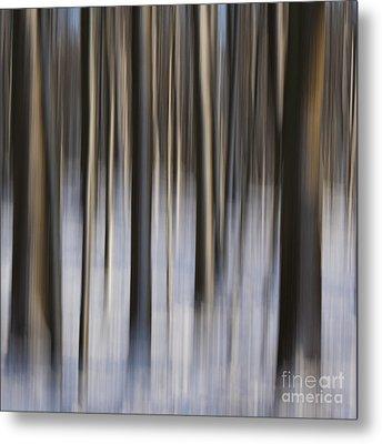 Woodland Fantasy Metal Print by Heiko Koehrer-Wagner