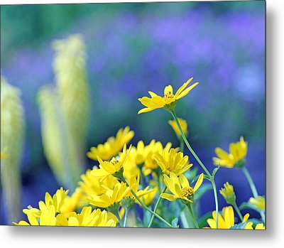 Yellow Flowers Metal Print by Becky Lodes