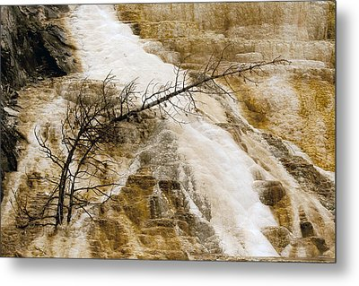 Metal Print featuring the photograph Yellowstone Color by J L Woody Wooden