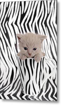Zebra Cat Metal Print by Waldek Dabrowski