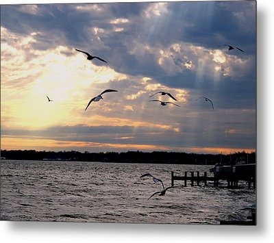 Seagulls In Flight Metal Print by Valia Bradshaw