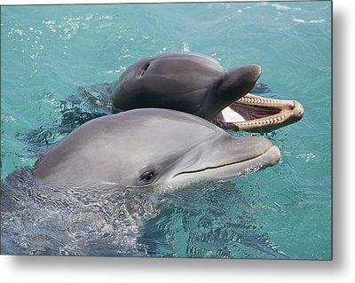 Atlantic Bottlenose Dolphins Metal Print by Dave Fleetham