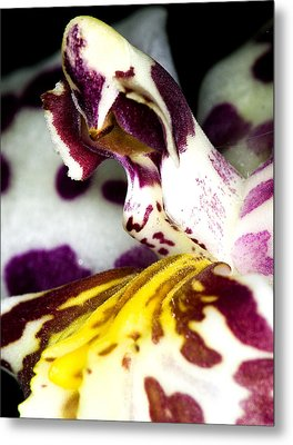 Metal Print featuring the photograph Exotic Orchid Flower by C Ribet