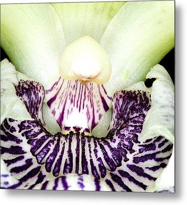 Orchid Flower Bloom Metal Print by C Ribet