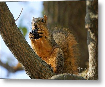Squirrel Metal Print by Lori Tordsen