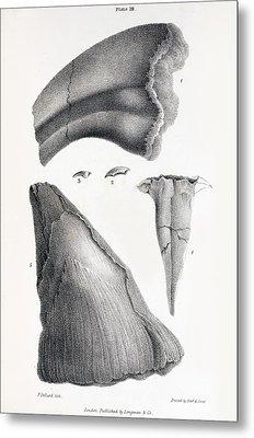 1833 Iguanodon Mistaken Spike Horn Fossil Metal Print by Paul D Stewart