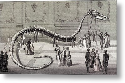 1851 Hydrarchos Whale Fake Monster Fossil Metal Print by Paul D Stewart