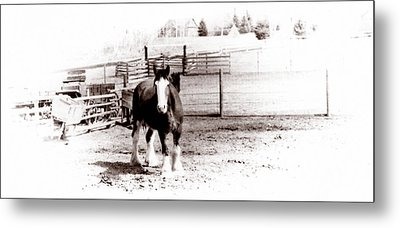 1900  Clydesdale Horse Metal Print by Marcin and Dawid Witukiewicz