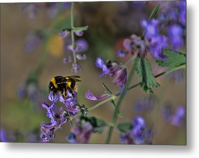 Metal Print featuring the photograph Bee by David Gleeson