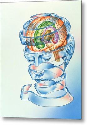 Brain Limbic System Metal Print by John Bavosi