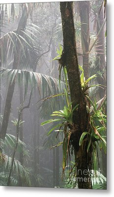 Bromeliads El Yunque National Forest Metal Print
