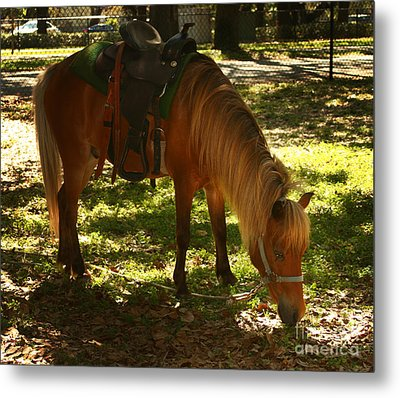 Brown Horse Metal Print by Blink Images
