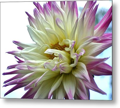 Metal Print featuring the photograph Dahlia by Katy Mei