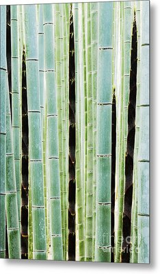 Detail Of Bamboo In A Forest Metal Print by Jeremy Woodhouse