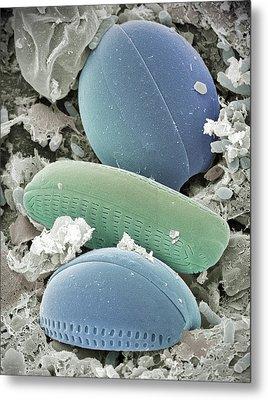 Diatom Algae, Sem Metal Print by Steve Gschmeissner