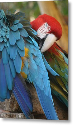 Feather By Feather Metal Print by Valia Bradshaw