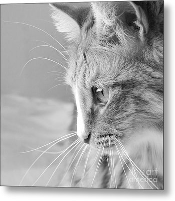 Metal Print featuring the photograph Flitwick The Cat by Jeannette Hunt