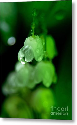 Flower And Drops Metal Print by Odon Czintos
