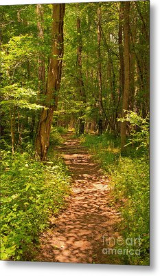 Forest Trail Metal Print by Bob and Nancy Kendrick