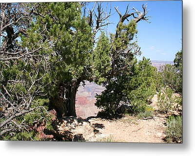 Grand Canyon National Park Arizona Usa Metal Print by Audrey Campion