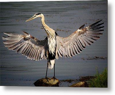 Great Blue Heron In The Marsh Metal Print by Paulette Thomas